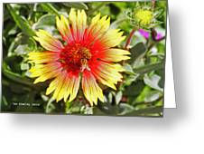 Honey Bees On Flower Greeting Card
