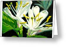 Honey Suckle Blossoms Greeting Card