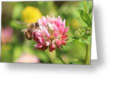 Honeybee And Clover Greeting Card