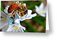 Honeybee And Squill Greeting Card