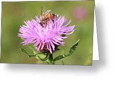 Honeybee At Work Greeting Card