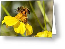 Honeybee Feasting On Nectar Of Yellow Flower Greeting Card