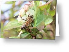 Honeybee In Blueberry Blossoms Greeting Card