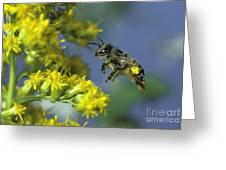 Honeybee In Flight Greeting Card