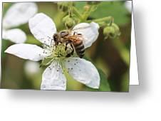 Honeybee On A Blackberry Blossom Greeting Card