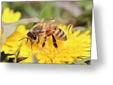Honeybee On A Dandelion Greeting Card