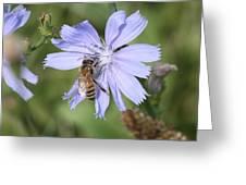 Honeybee On Chicory Greeting Card