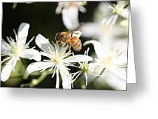 Honeybee On Clematis Greeting Card