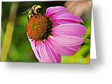 Honeybee On Echinacea Flower Greeting Card