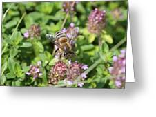 Honeybee On Heal All Greeting Card