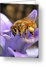 Honeybee On Hyacinth Greeting Card