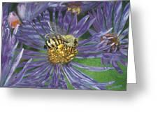 Honeybee On Purple Aster Greeting Card
