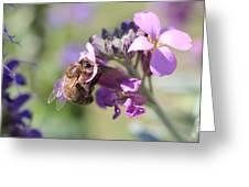 Honeybee On Purple Wall Flower Greeting Card
