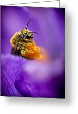 Honeybee Pollinating Crocus Flower Greeting Card