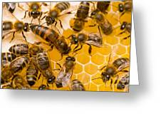 Honeybee Workers And Queen Greeting Card