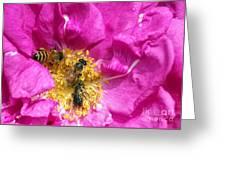 Honeybees On Pink Rose Greeting Card