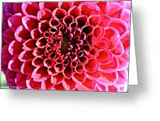 Honeycomb Dahlia Greeting Card
