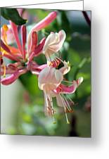 Honeysuckle With Keyhole Greeting Card
