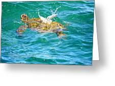 Honu Hawaiian Green Sea Turtle Greeting Card