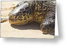 Honu - Hawaiian Sea Turtle Hookipa Beach Maui Hawaii Greeting Card