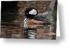 Hooded Merganser 2 Greeting Card