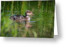 Hooded Merganser Duckling Greeting Card