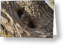 Hooded Merganser In The Knot Hole  Greeting Card