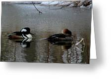 Hooded Merganser Mates Greeting Card