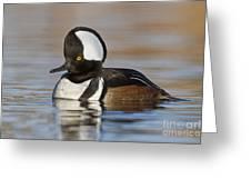 Hooded Merganser On Calm Pond Greeting Card