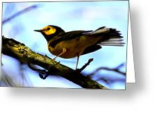 Hooded Warbler - Img 9290-002 Greeting Card