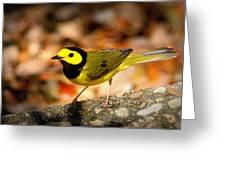 Hooded Warbler - Img 9352-003 Greeting Card
