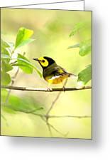 Hooded Warbler - Img_9274-009 Greeting Card