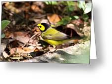 Hooded Warbler - Img_9349-001 Greeting Card