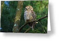 Hootie Barred Owl Greeting Card