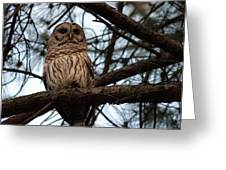 Hootie The Barred Owl A Greeting Card