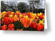 Hopping Hot Tulips Greeting Card