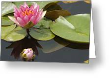 Horizontal Lily And Bud Greeting Card