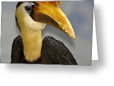 Hornbill 2 Greeting Card