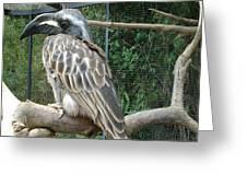 Hornbill Bird Greeting Card