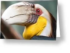 Hornbill Bird Portrait Closeup Greeting Card