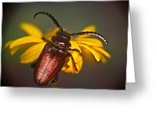Horned Beetle Greeting Card