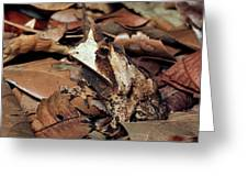 Horned Frog Camouflaged In Leaf Litter Greeting Card