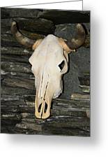 Horned Skull Greeting Card