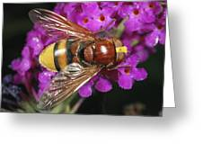 Hornet Mimic Hoverfly Greeting Card
