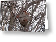 Hornets Nest East Greeting Card