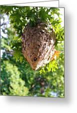 Hornets Nest Greeting Card