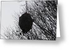 Hornets Nest West Greeting Card