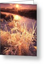 Hors Front Sunrise Greeting Card