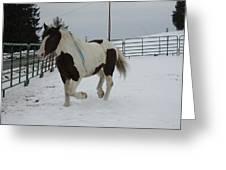 Horse 03 Greeting Card