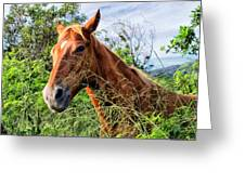 Horse 1 Greeting Card